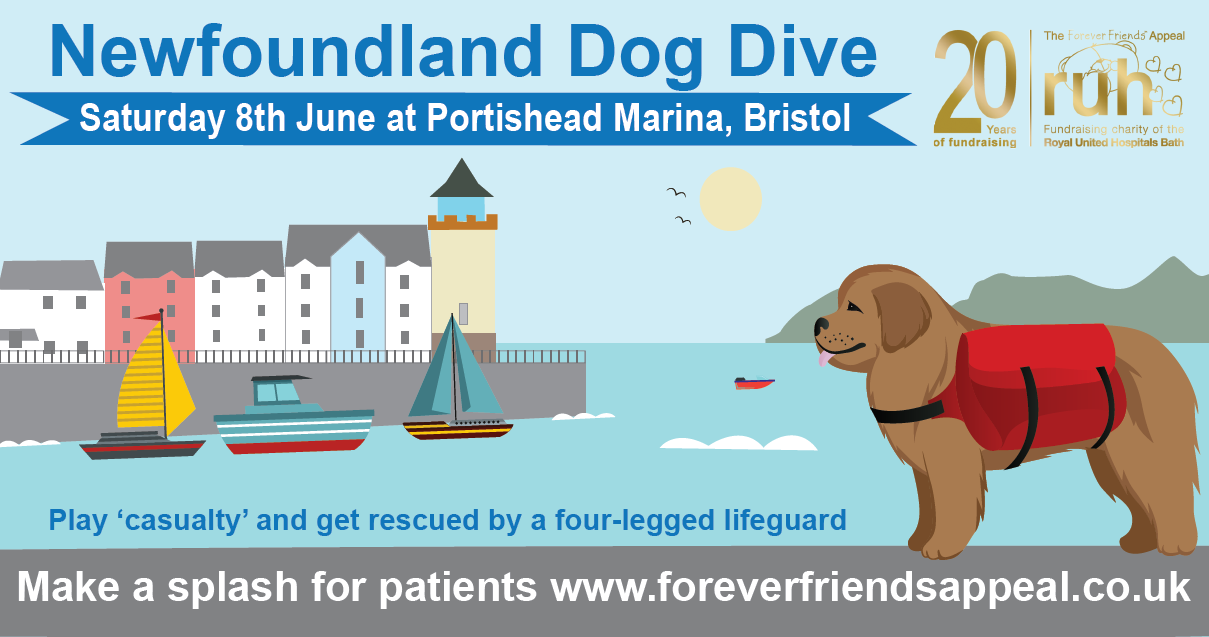 Image for Newfoundland Dog Dive 2019 – Make a splash for RUH patients