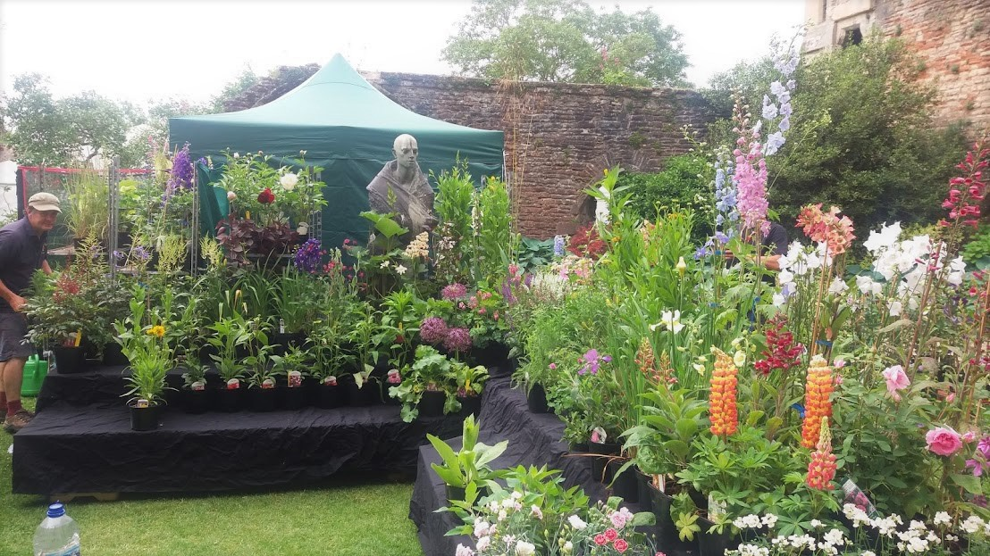 Image for Rare Plant Fair