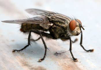 Cluster Fly