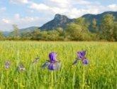 field with 2 purple flowers in